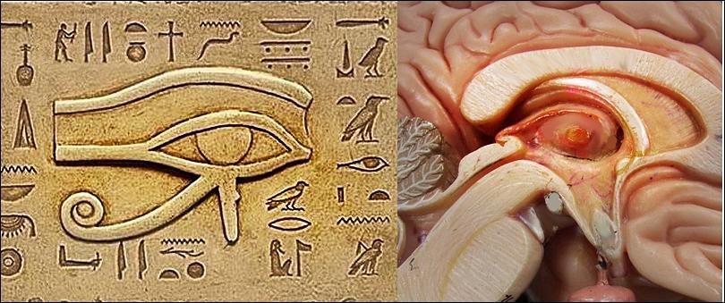 human-brain-pineal-eye-of-horus